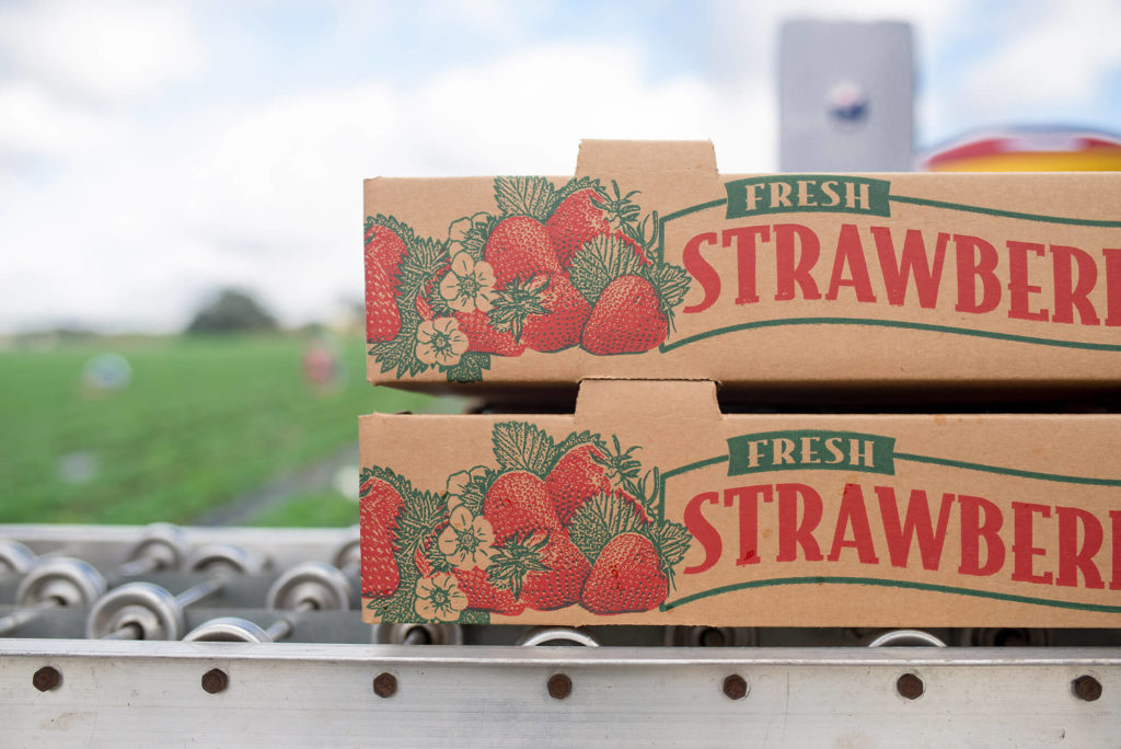 About Sizemore Farms | Strawberry Production | High-Quality